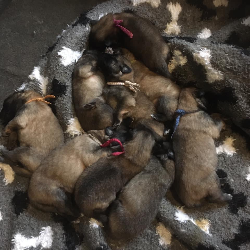 de puppies